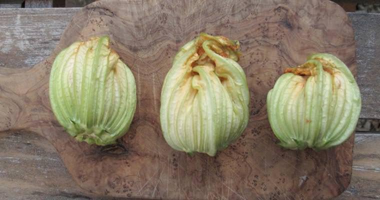 Fiori di zucchine