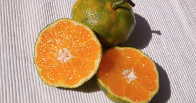 Mapo for Mapo frutto