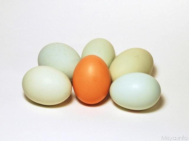 come sostituire le uova_01