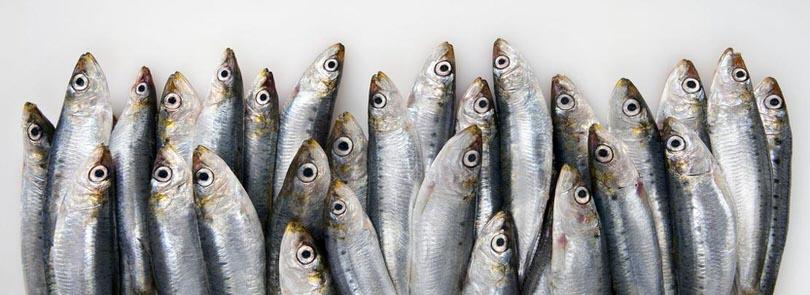 Come cucinare le sardine in modo veloce e ... - Pianetadonna
