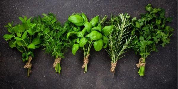 Come abbinare le erbe aromatiche